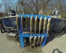 blue-dolphin-walleye-charters-4262013-2