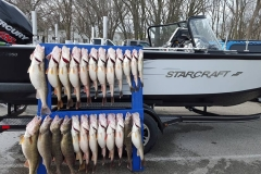 blue-dolphin-walleye-charter-customer-63