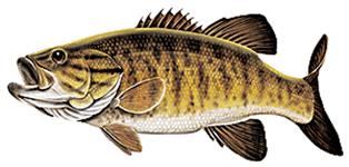 Lake Erie Smallmouth Bass Fishing Charter