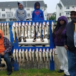 Lake Erie Walleye Charter - June 2019